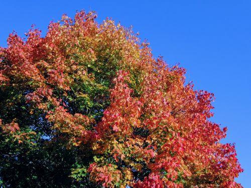 tree autumn golden autumn
