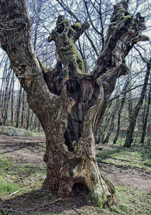 tree log autumn