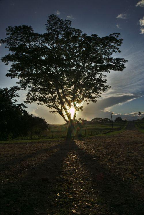 tree sun sun flares