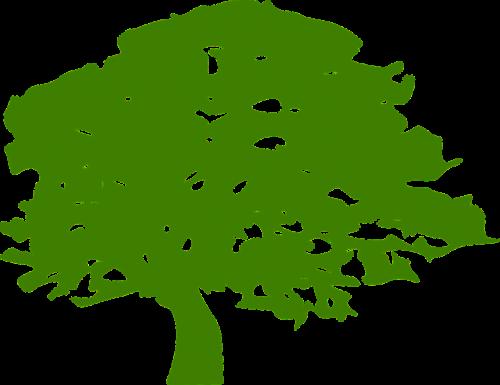 tree green leaves