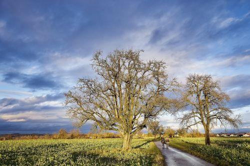 tree weather sky