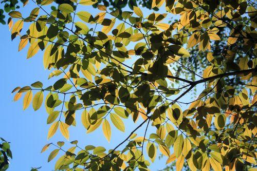 medis,saulės šviesa,gamta,saulė,miškas,saulės šviesa,saulėtas,saulės šviesa,dienos šviesa,Šri Lanka