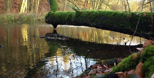 tree moss nature
