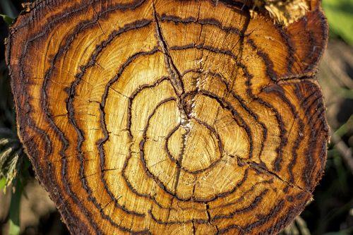 medis,skraidantis,gamta,bagažinė,tekstūra