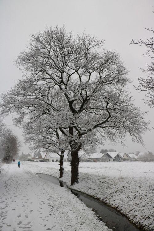 tree snow winter