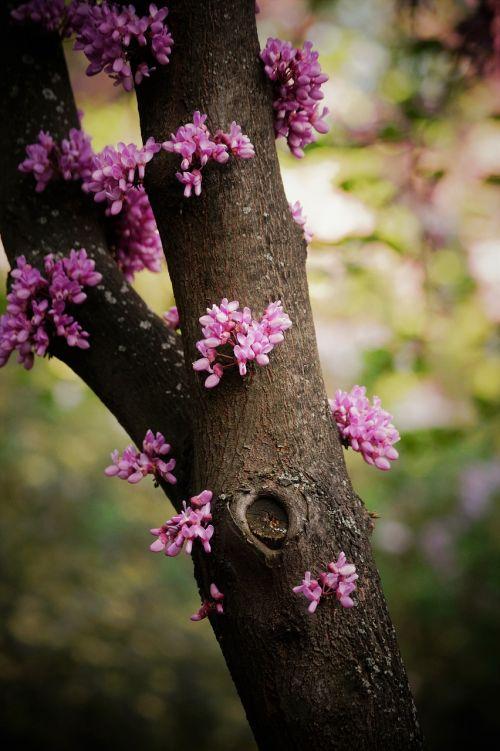 tree flowers retiro madrid