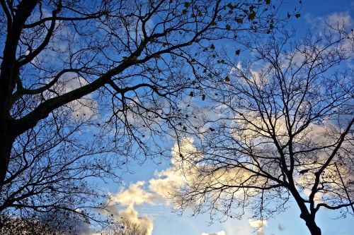 tree tree tops branch