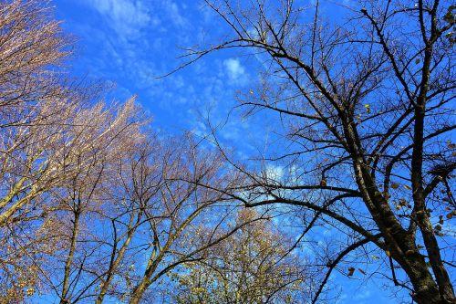 tree tree top branch