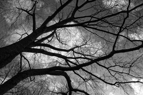 tree branch winter tree