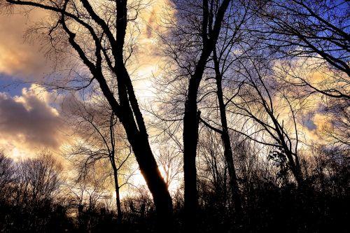 tree bare tree branch