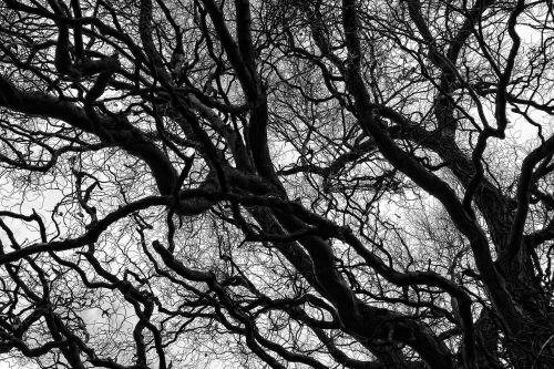 tree branch bare branch