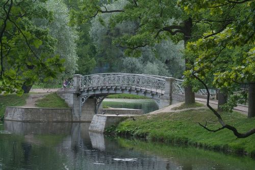 tree bridge water
