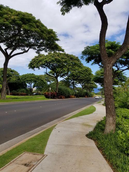 tree road nature