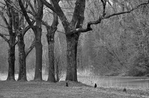 tree trunk branch