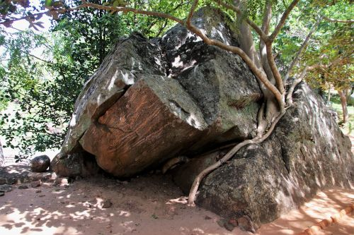tree konary the roots of the