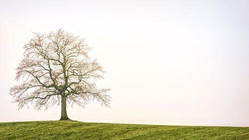 tree nature landscape