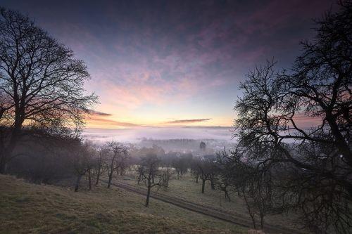 tree dawn nature