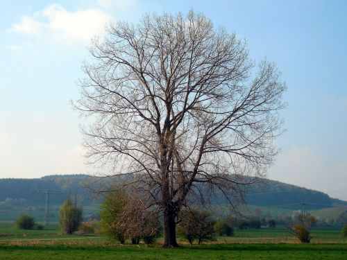 tree individually kahl