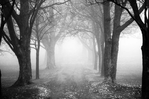 tree fog mist