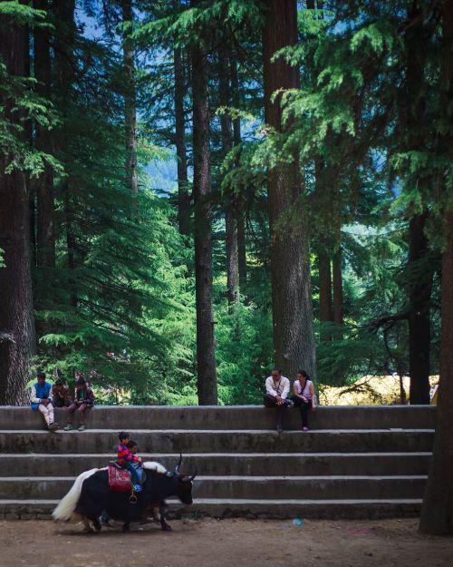 tree wood park