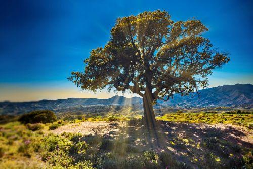tree sunbeams nature