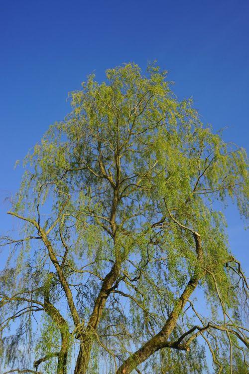 tree pasture large