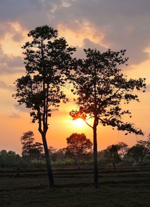 tree sun sunset