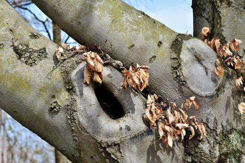 tree knothole gnarled