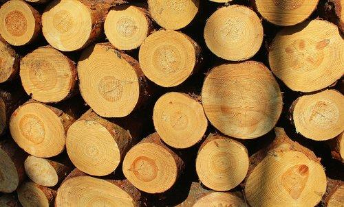 tree  cut  cutting