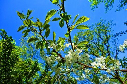 tree  foliage  blossom