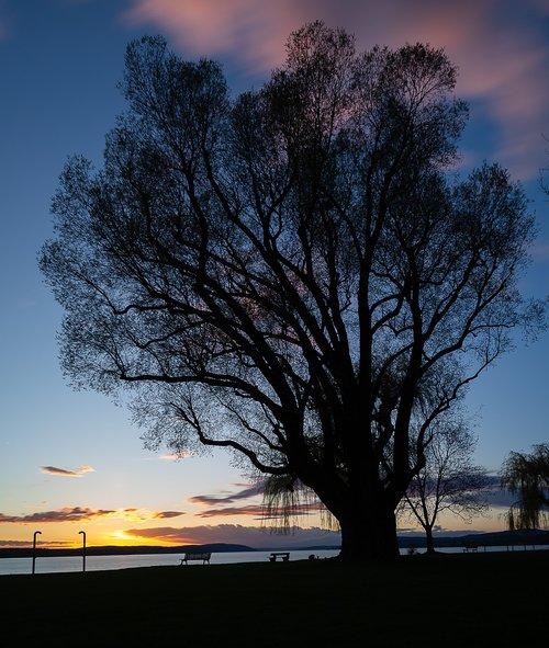 tree  landscape  nature