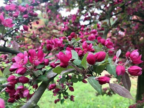 tree  bud  buds