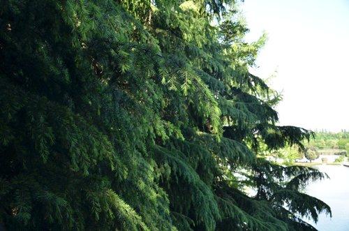tree  nature  leaf