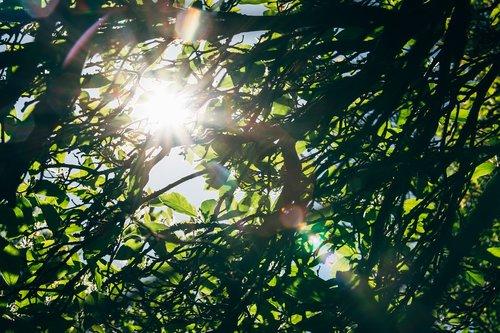tree  leaf  foliage