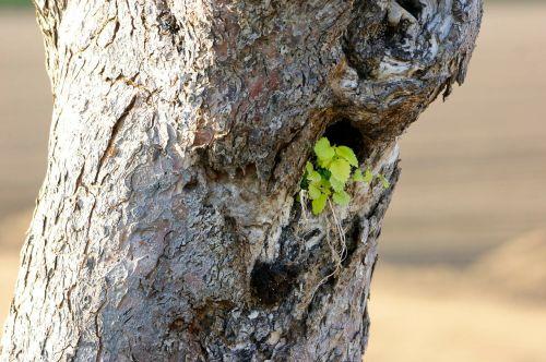 tree tree stump green