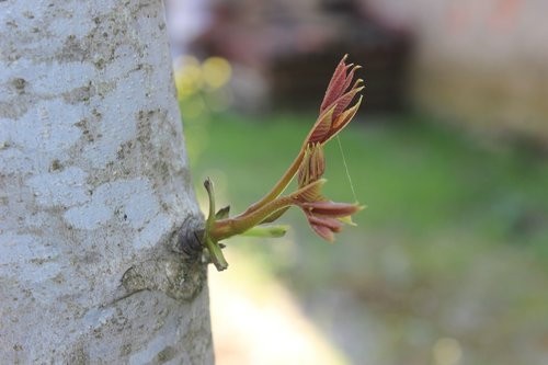 tree  sprout  nature