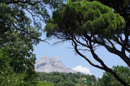 tree  mountain  crimea