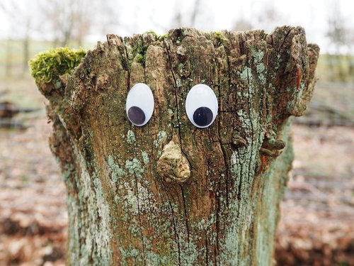 tree  tree stump  face