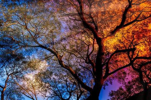 tree  sunbeam  rays