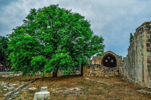 tree  wall  ruins