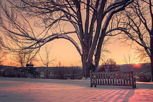 medis,stendas,poilsis,saulėlydis,twilight,romantiškas,žiema,šaltas,medžiai,mediena,sniegas,kalnai,vaizdas,horizontas