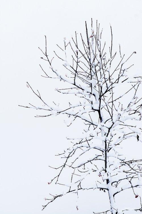 tree  kahl  winter