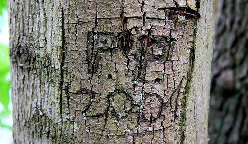 tree  the bark  model