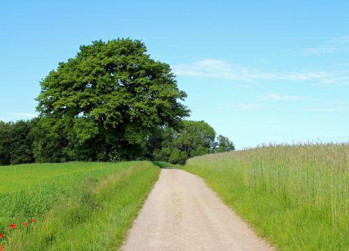 tree individually away