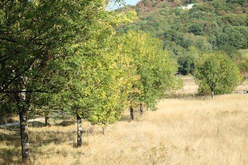 tree  field  pre
