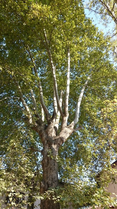 tree  long  branches