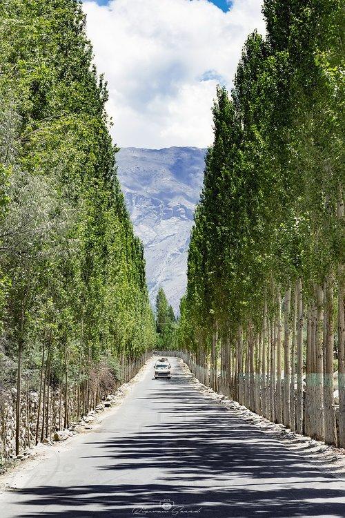 tree  avenue  beauty