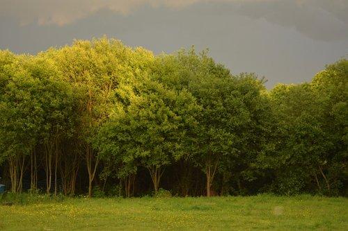 tree  tree storm  landscape stormy