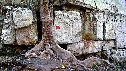 tree  survive  nature