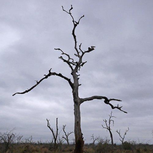 tree  dead  dead plant